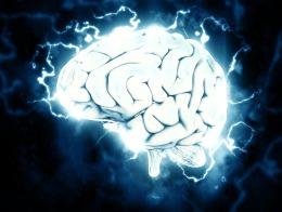 Schema eines Gehirns