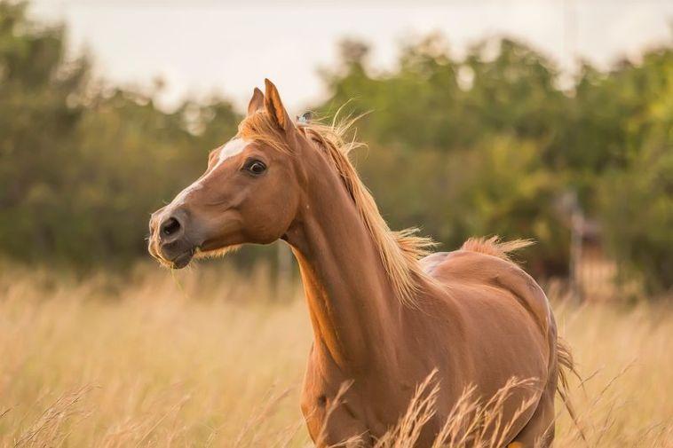 Craniosacraltherapie geht bei allen Lebewesen, die eine Wirbelsäule haben Tieren